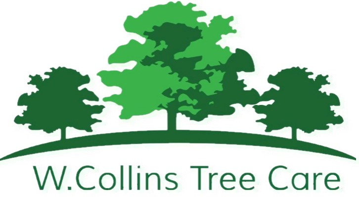 Will Collins Tree Care
